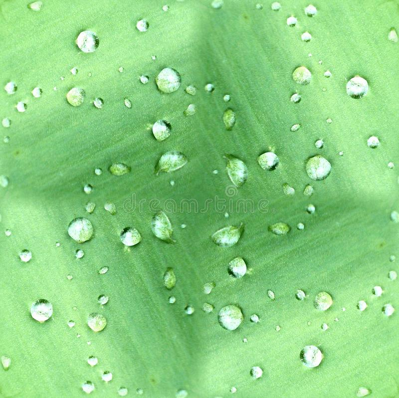 Download Dew Drops On Green Leaf Pattern Stock Photo - Image of macro, abstract: 10071882