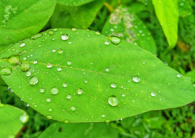Dew drops in leaves morning. stock photos