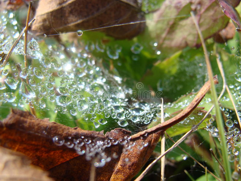 Dew drops on a spiderweb