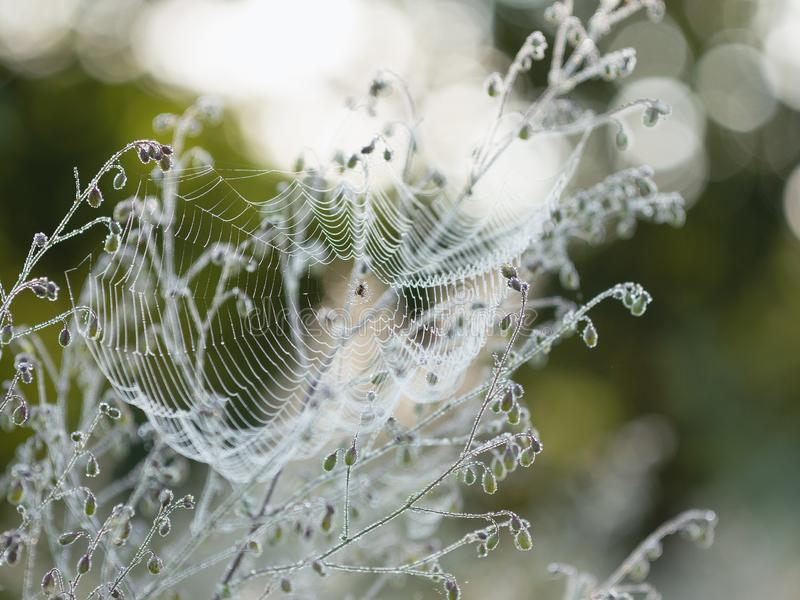 Spiderweb in morning dew. Dew in the early morning on the web of a small spider stock photography