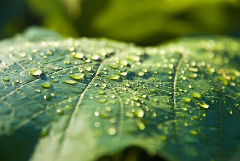 Dew on foliage stock photography