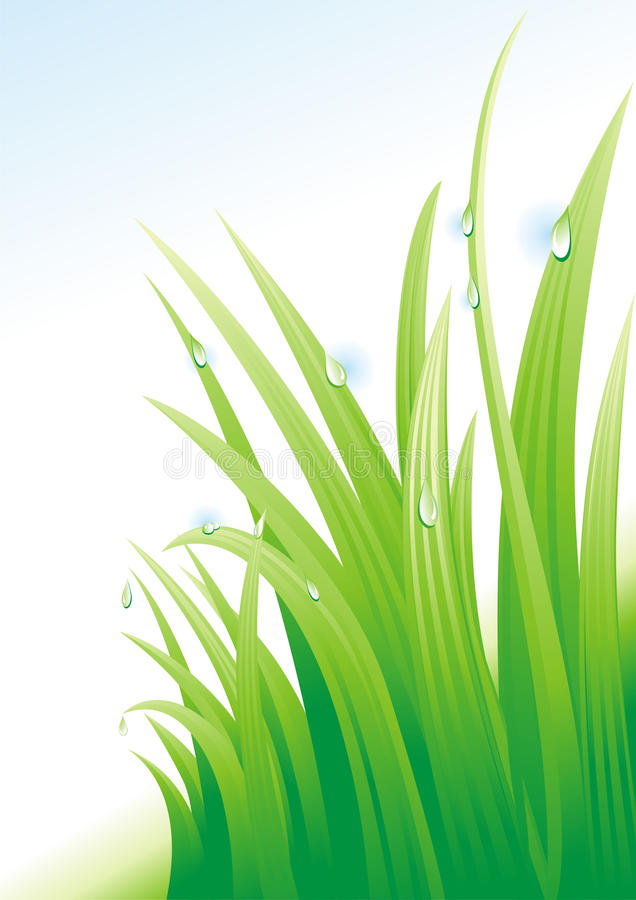 Download Dew on a grass. stock vector. Image of herb, pure, green - 10271469