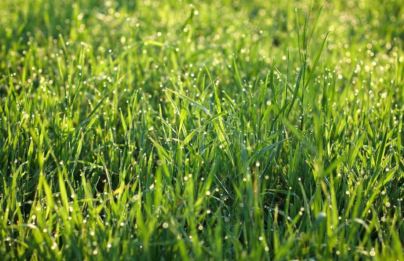 Download Dew on grass stock photo. Image of green, cleanness, open - 10919576