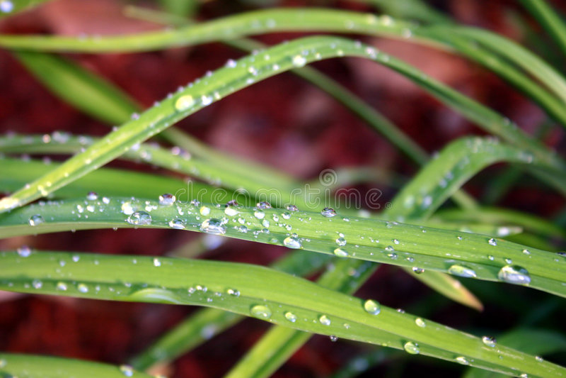 Dew on grass royalty free stock photos