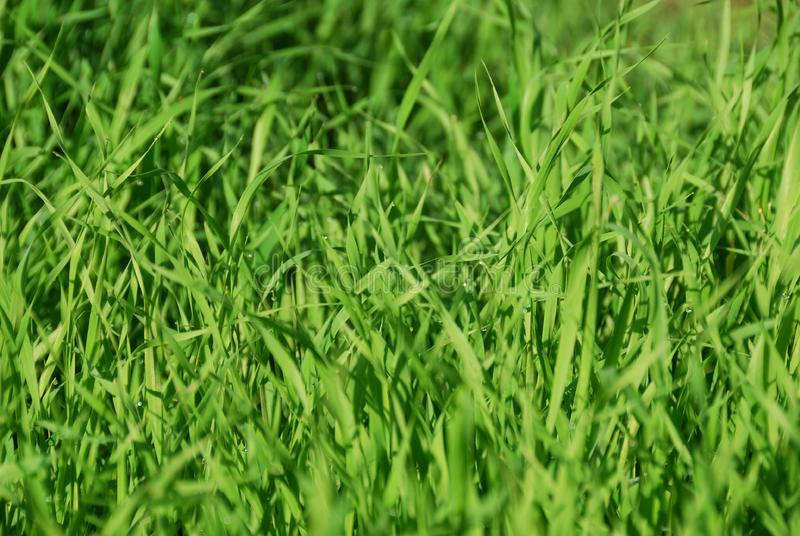 Download Dew on a grass stock image. Image of growth, nature, outdoor - 8423219