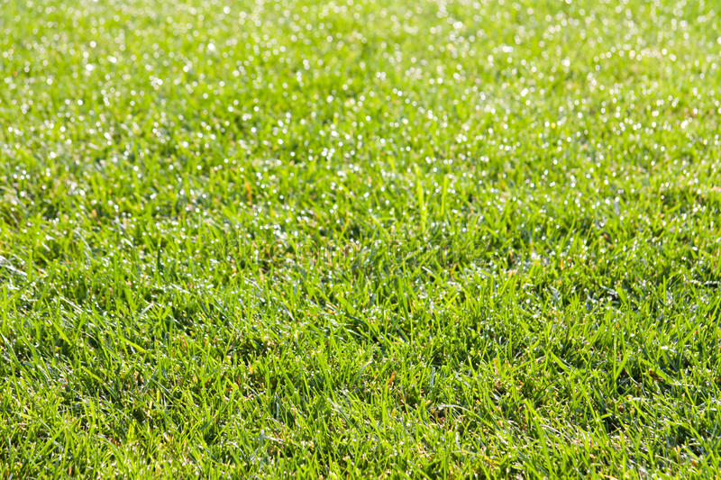 Download Dew On Grass In The Morning Royalty Free Stock Photography - Image: 28683827