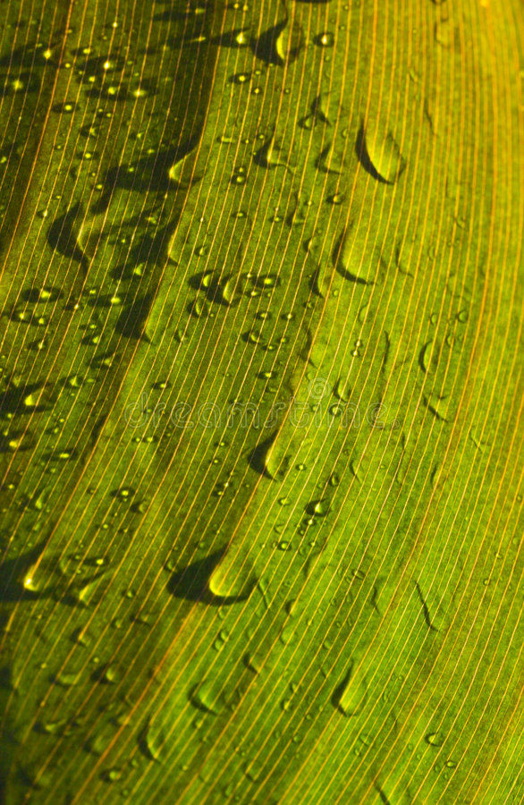Dew On Green Leaf Stock Photography