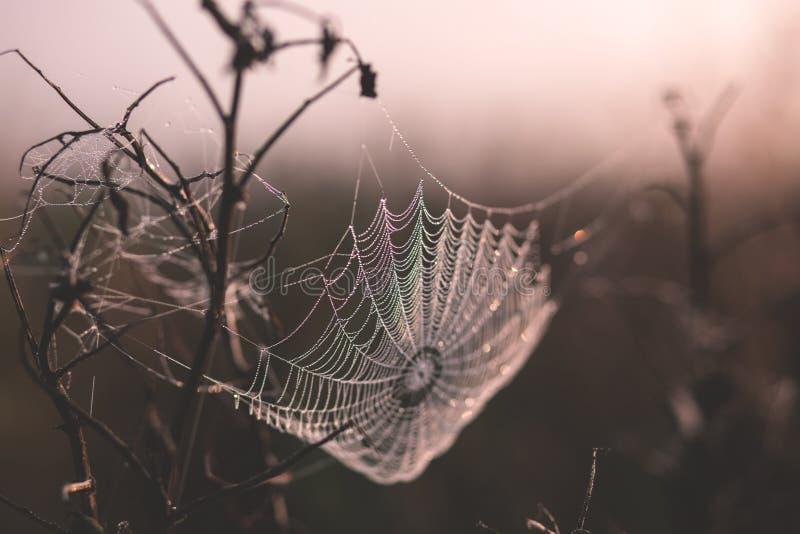 Dew On A Spider's Web Free Public Domain Cc0 Image