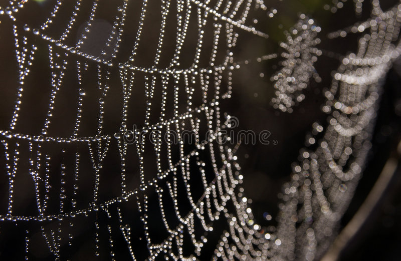 Download Dew On Spider Web Royalty Free Stock Photography - Image: 4347877