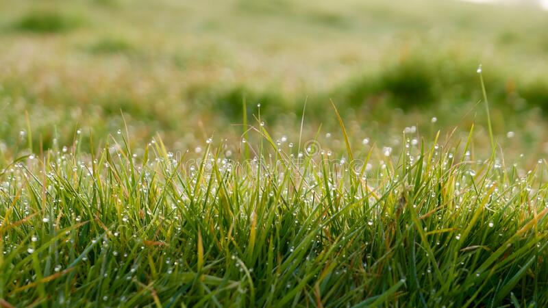 Dew on sunny grass royalty free stock images