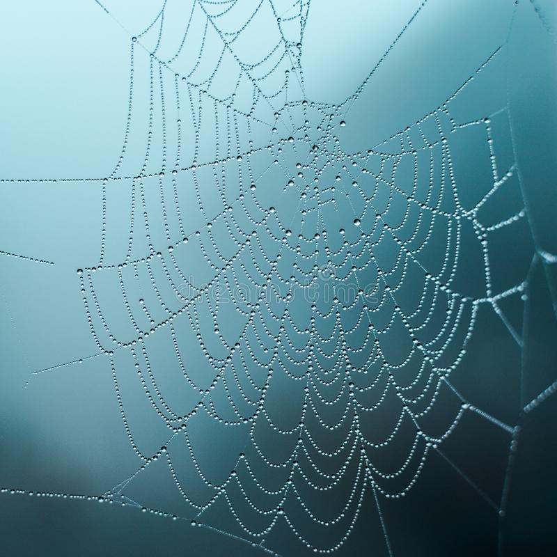Dew on the web on a foggy day, selective focus, cold tones, background stock photo