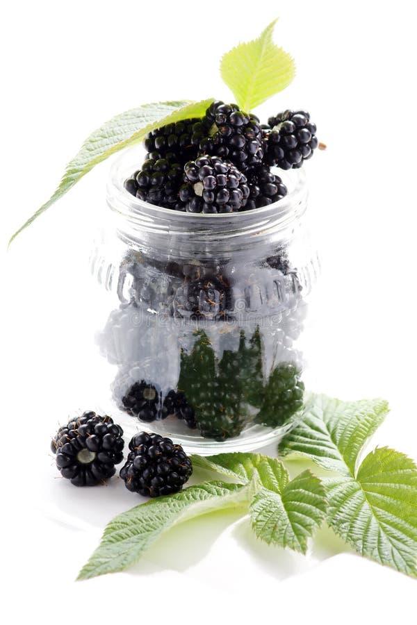 dewberries ежевик стоковое фото rf