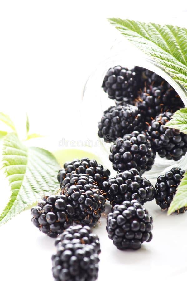 dewberries стоковые фотографии rf