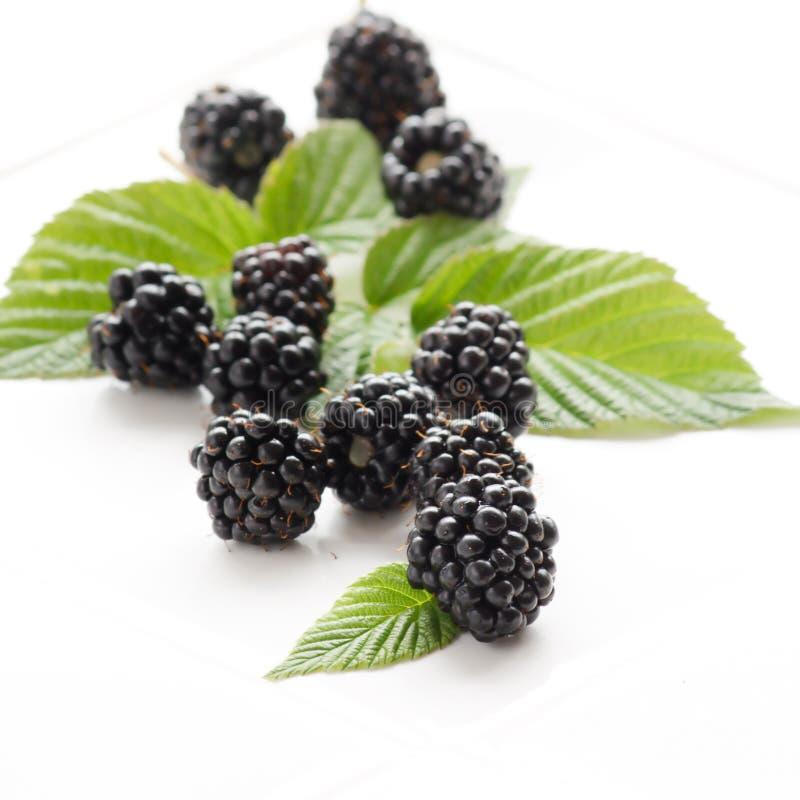 dewberries стоковое изображение rf