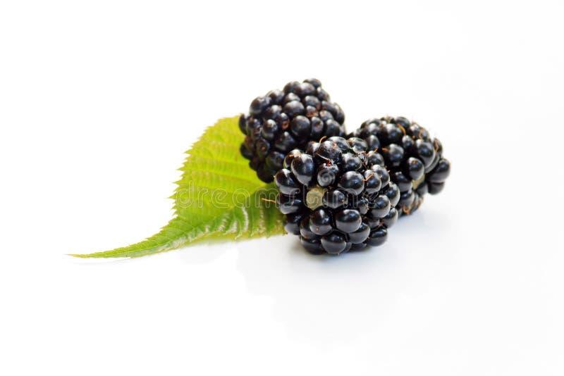 dewberries стоковые изображения