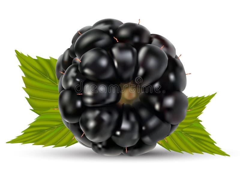 Dewberries (björnbär) vektor illustrationer