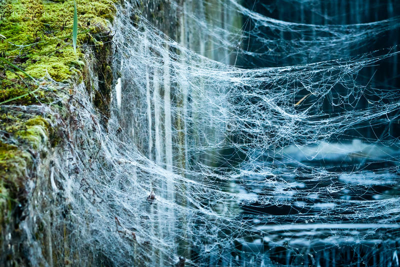 Download Dewdrop in spider web stock image. Image of green, silk - 20450215