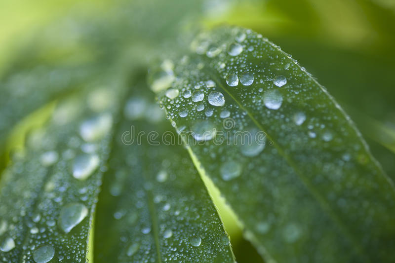 Dewdrops stock images