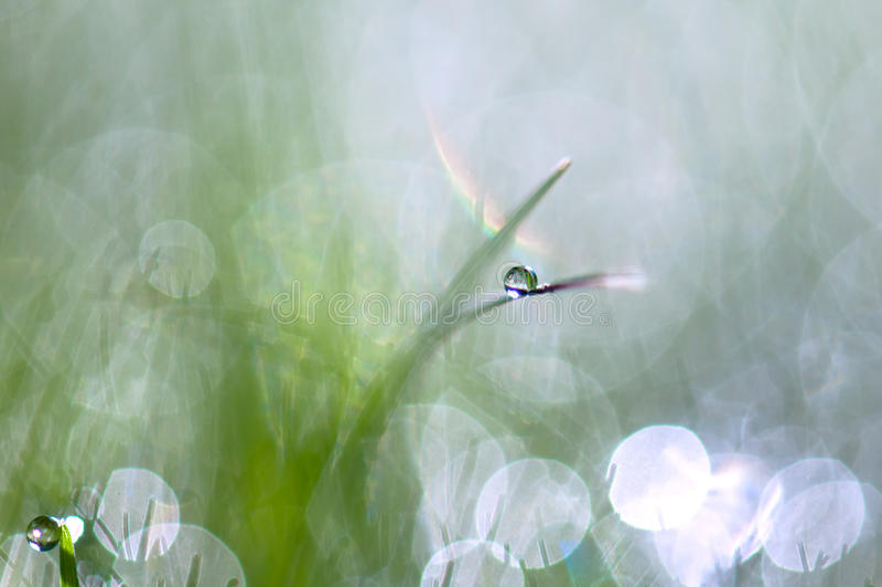 dewdrops стоковое фото rf