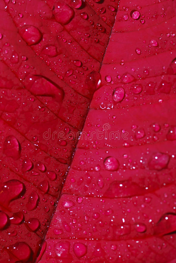 Download Dewdrops Royalty Free Stock Photography - Image: 28032347