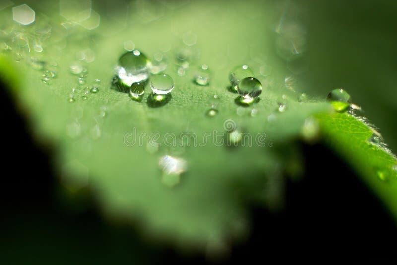 dewdrops stockbilder