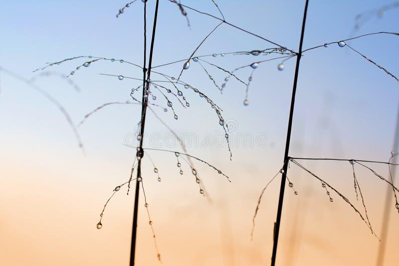 Dewdrops auf dem Gras stockfotos