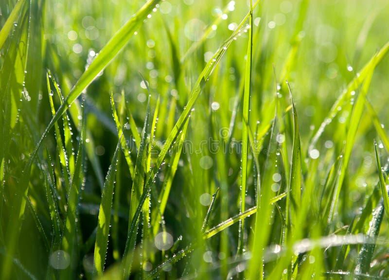 Dewdrops auf grünem Gras lizenzfreie stockfotografie