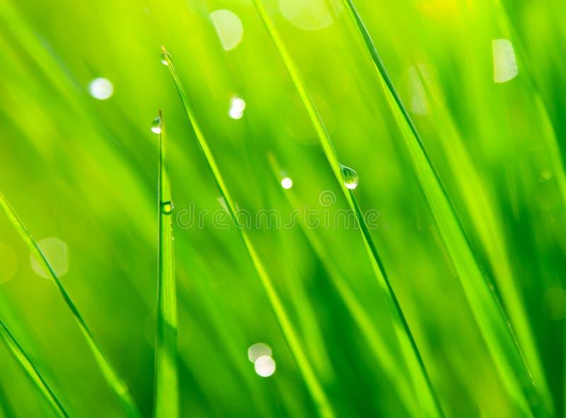Dewdrops auf grünem Gras stockbild