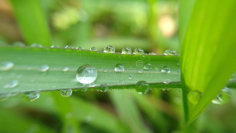 dewdrops lined the edge of the grass royalty free stock images