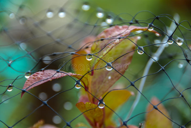 Download Dewdrops On Mesh Stock Photo - Image: 49721633