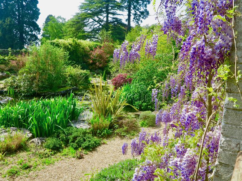 Colours in the garden. Dewstow Gardens Caerwent Caldicot Wales united kingdom royalty free stock image