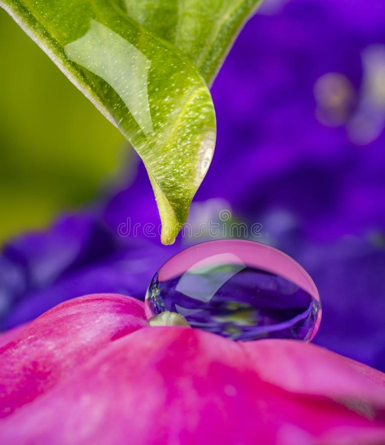 Dewy flower in the detail. Macro photo royalty free stock photo