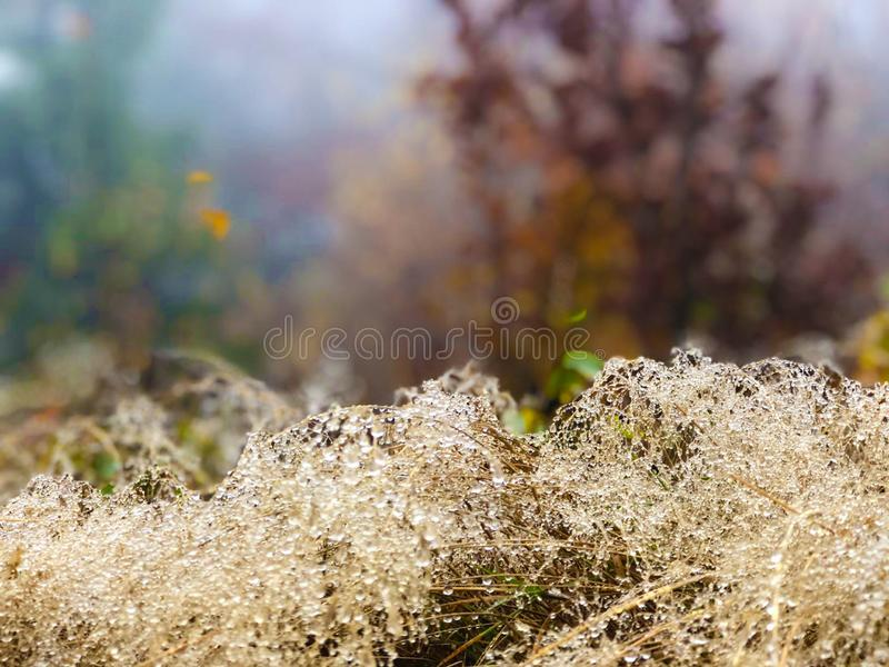 Dewy forest undergrowth in autumn. Blurred background. royalty free stock photos