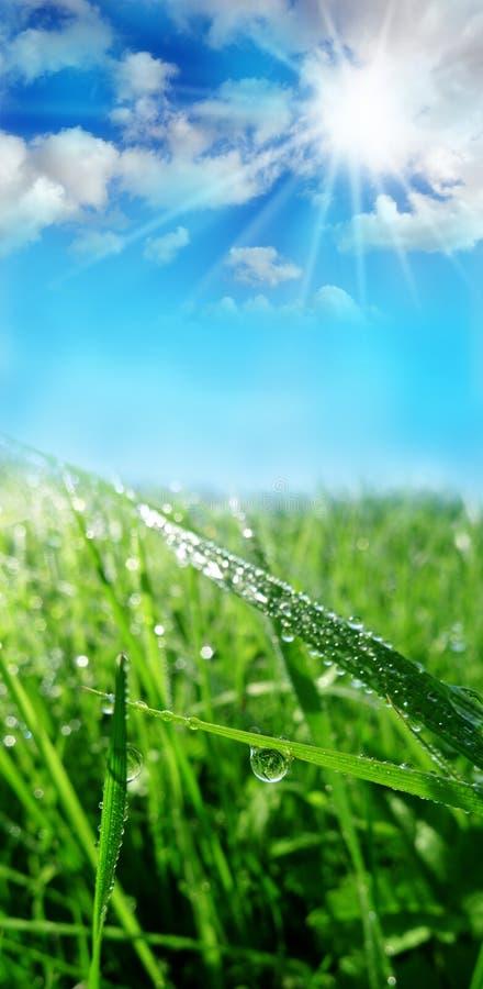 Dewy grass. Mornin meadow with dewy grass stock image