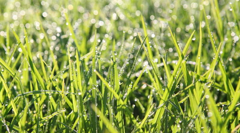 Dewy Grass stock photography
