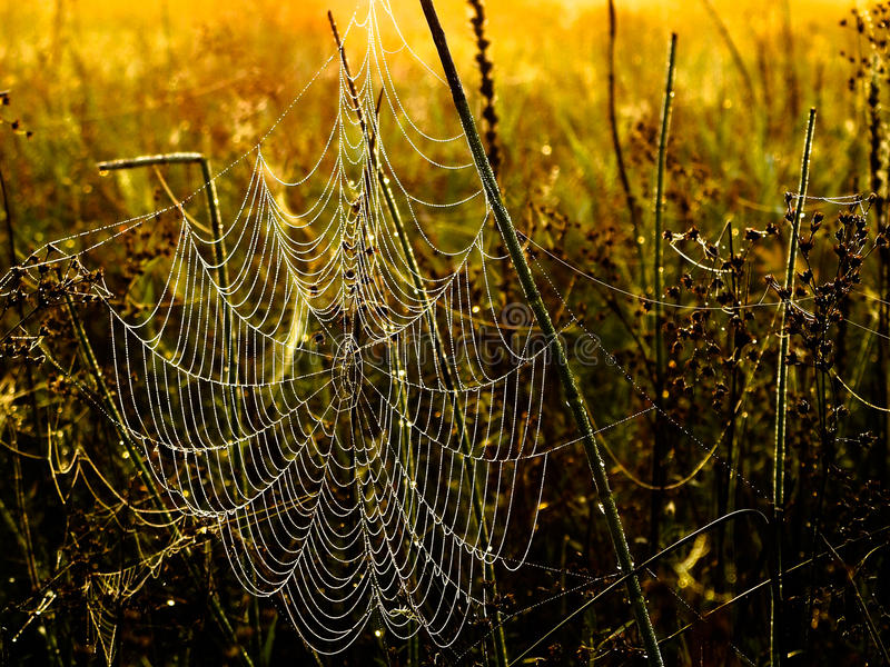 Dewy Spiderweb royalty free stock image