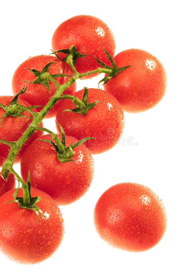 Download The Dewy Tomato stock image. Image of macro, dewy, nutrition - 11383361