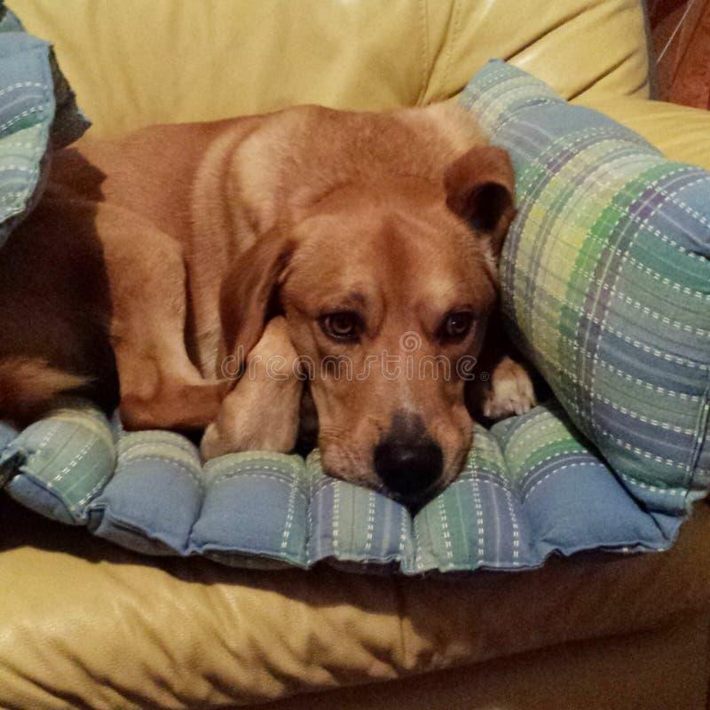 Dexter the dog stock photos
