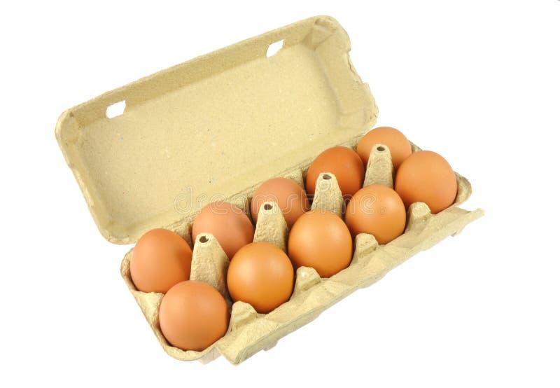Dez ovos marrons na caixa de papel do ovo imagem de stock royalty free