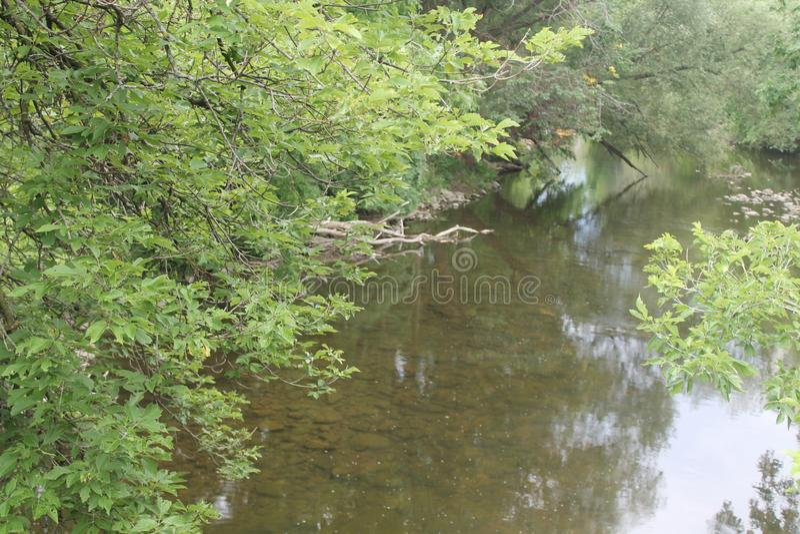 Deze vlek op de rivier behoort tot de eenden royalty-vrije stock fotografie