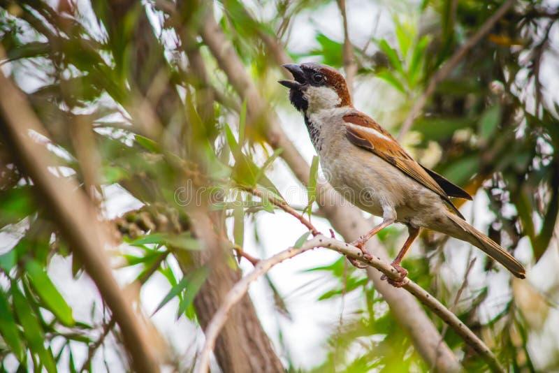 Deze vogels sterven wegens verontreiniging in New Delhi stock foto