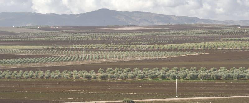 12. Dezember 2017 Volubilis, Marokko Linien von Olive Groves Are Seen From der Standort Roman Ruinss von Volubilis nahe Meknes, stockfoto