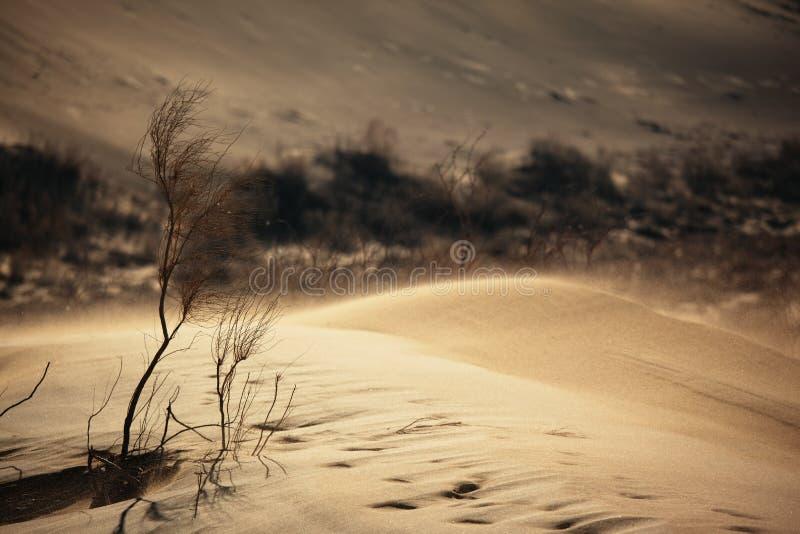 dezerteruje burza piaskowa obraz stock