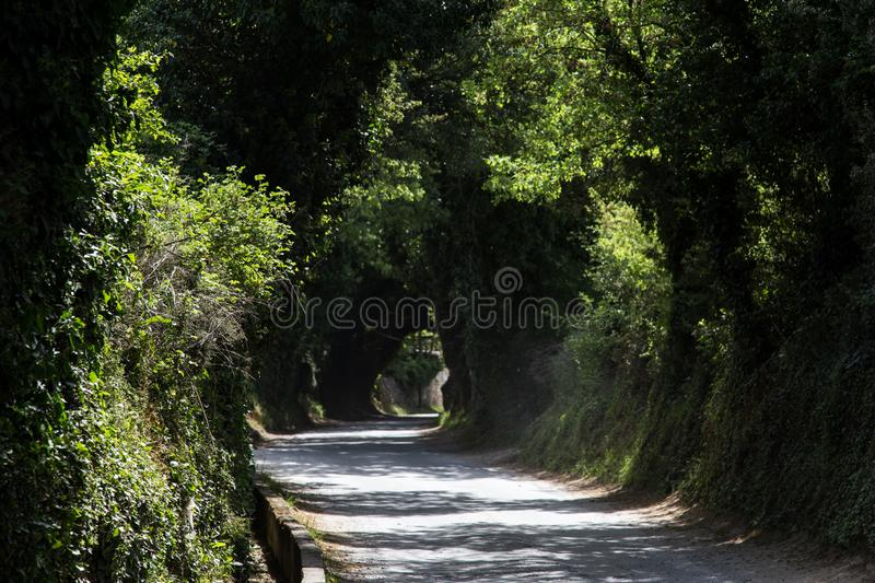 A mystical road. Surrounded by trees royalty free stock image