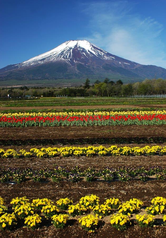 dg 24 Fuji mt obrazy royalty free