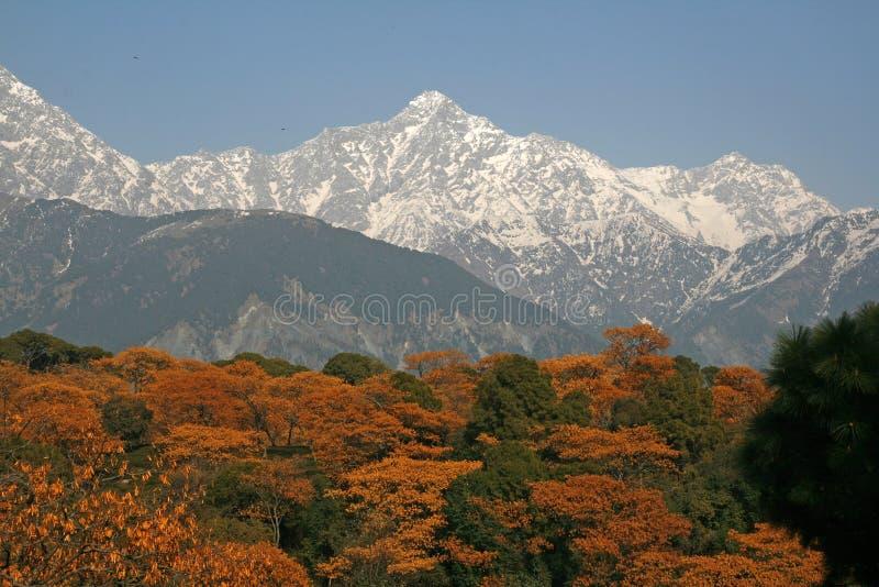Download Dhauladhar Himalayas View From Tea Garden Stock Image - Image: 4533813