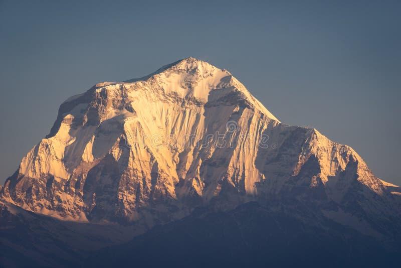 Dhaulagiri halny szczyt, siódmego wysoki szczyt w świacie w ranku wschód słońca, Annapurna pasmo, himalaje góra, Nepal fotografia royalty free