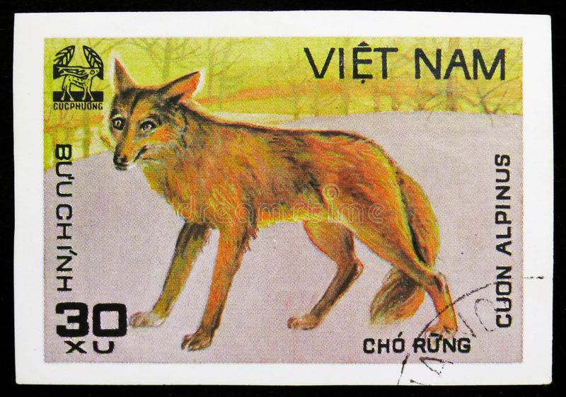 Dhole (Cuon alpinus), Animals from Cuc Phuona Nati Forest serie, circa 1981. MOSCOW, RUSSIA - SEPTEMBER 26, 2018: A stamp printed in Vietnam shows Dhole (Cuon stock photo