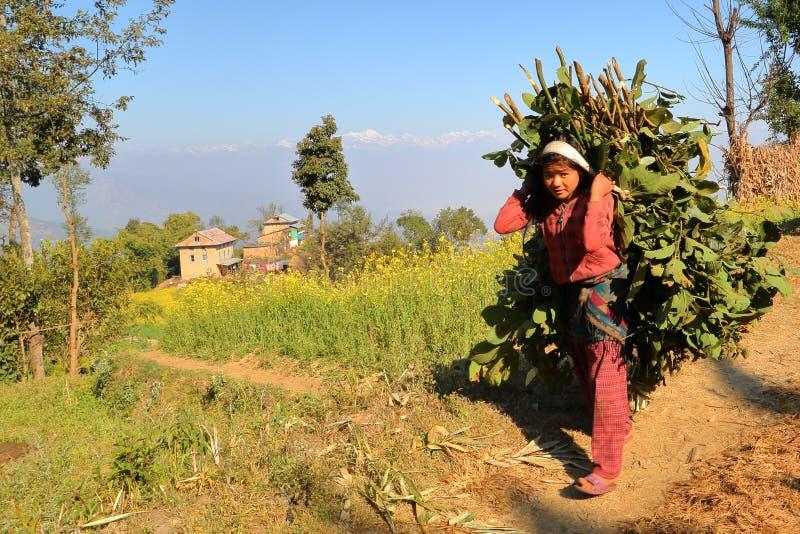 DHULIKHEL, NEPAL - 25 DE DEZEMBRO DE 2014: Jovem mulher nepalesa que leva a carga do alimento verde nela para trás no campo perto fotos de stock royalty free