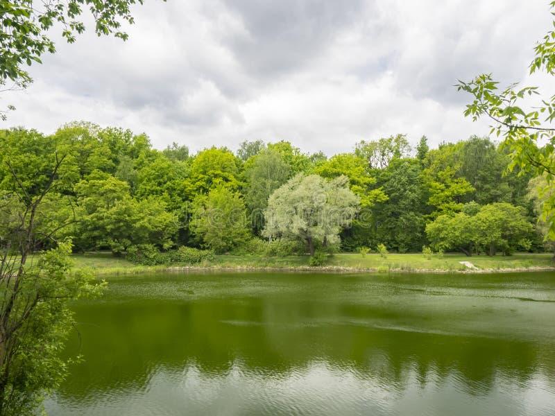 di alberi colorati Multi dallo stagno fotografie stock